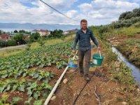 Kabak hasadı başladı, çiftçi fiyatlardan memnun