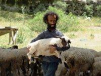 Kendini koyunlara adadı