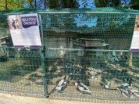 Fabrikaya dev hayvanat bahçesi kurdular, 1,5 milyon ziyaretçiyi ağırladılar