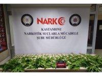 Kastamonu'da 46 kök kenevir bitkisi yakalandı