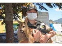 Çobanın bulduğu sakat karacayı, belediye başkanı teslim aldı