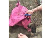Yavru köpeği çuvala koyup, ağzını sıkı sıkıya bağladılar