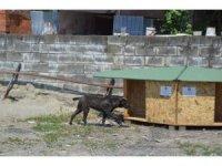 Sokak hayvanları bu proje sayesinde üşümeyecek