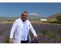 Ağrı Dağı eteklerinde yetiştirilen lavanta çiçeklerinden kozmetik ürünler elde edilecek
