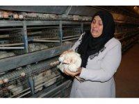 Kahramanmaraş'ta 10 bin tavuk telef oldu, sahibi ağıt yaktı