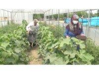 Devlet desteğiyle kurulan seralarda sebze üretimi
