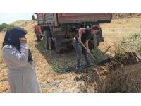 Kahramanmaraş'ta telef olan binlerce tavuk çukura gömüldü