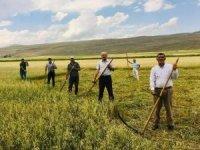Kuraklık çiftçiyi eski aletlere yönlendirdi