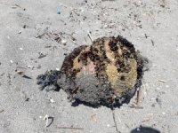 Denizden çıkan cisim tatilcileri korkuttu