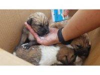 Porsuk kenarında mahsur kalan köpek yavrularını AKUT kurtardı