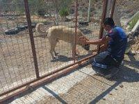 Marmaris'te yangından etkilenen hayvanlar tedavi ediliyor