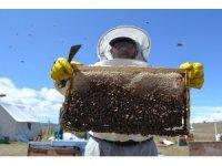 Tokat'ta kuraklık arıcıları vurdu, bal üretimi yüzde 40 düştü
