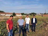 Şifa kaynağı aronya Mudanya'da üretilecek