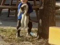 Küçük çocuğun kedi sevgisi yürekleri ısıttı