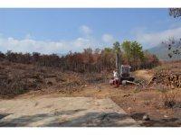 Mersin'de yanan ormanlık alanlar ağaçlandırılacak