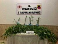 Trabzon'da jandarma ekiplerinin uyuşturucu ile mücadelesi hız kesmeden devam ediyor