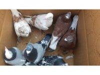 Mersin Barosu, kuş pazarındaki hak ihlalleri için harekete geçti