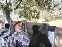 Ceviz toplarken kalp krizi geçiren yaşlı adam hayatını kaybetti