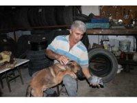 Yavru güvercin ile köpeğin dostluğu yürekleri ısıttı