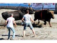 Ula arenasında ilk boğa güreşi
