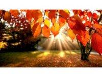 Sararan yapraklar Sonbahar Depresyonunun habercisi