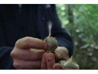 Sakarya ormanlarında mantar avı