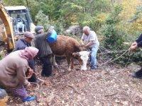 Tokat'ta kayalıklar arasına düşen inek kurtarıldı