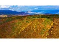 Topçam dağında hazan mevsimi