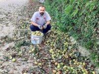 Organik elmalar pekmeze dönüşüyor