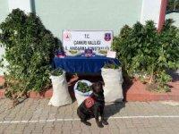 Çankırı'da uyuşturucu operasyonu: 1 tutuklama