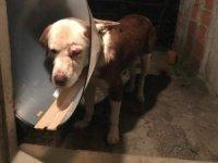 Kimliği belirsiz kişiler köpeği dövüp yaraladı