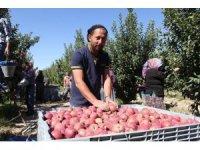 Isparta elmasından ekonomiye 1 milyar 862 milyon liralık katkı