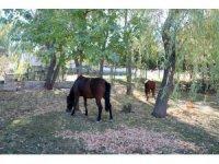 Terk edilmiş iki at ve eşeğe Çankaya'da barınakta sahip çıkılıyor