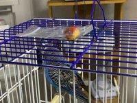 5 yaşındaki kuşun karnından ceviz büyüklüğünde tümör çıktı
