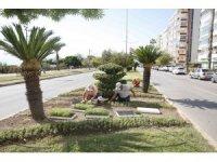 Antalya'da 3 milyon kışlık çiçek toprakla buluşuyor