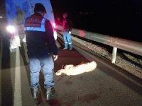 Aracın çarpması ile yaralanan köpek barınakta tedaviye alındı