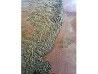 İngiltere hükümeti denizlere dökülen kanalizasyon atıkları için önlem alacak