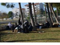 Didim'de 75 göçmen yakalandı