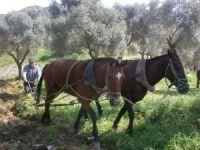 Çiftçi Kayıt Sistemi'ne müracaat müddeti uzatıldı