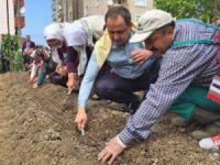 Giresun Belediyesi'nden 'Üreten Giresun, Üreten Türkiye' Kampanyası