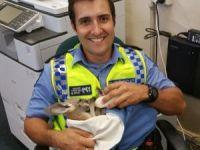 Kartalların Saldırdığı Yavru Kanguruyu Polis Kurtardı