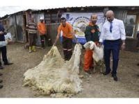 Türkiye'de İlk Defa Kırkım Şampiyonası Düzenlenecek