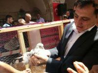 Şanlıurfa'da 'Güvercin Festivali' başladı