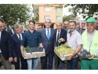 İlk siyah incir ihracatı Almanya'ya