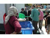 Karadeniz kasabasında balık bolluğu