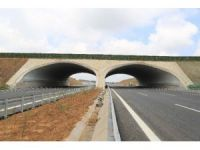 Kuzey Marmara Otoyolu güzergahına 604 bin fidan daha dikilecek