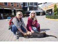 Sokak köpeğini bıçaklayan profesör kayıplara karıştı