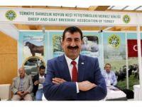 Türkiye'de koyun ve keçi sayısı 10 yılda 14 milyon arttı