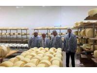 170 kişiyle üretim yapan peynir fabrikasında incelemeler