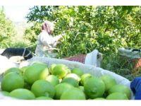 Rusya pazarının canlanması üreticiyi umutlandırdı